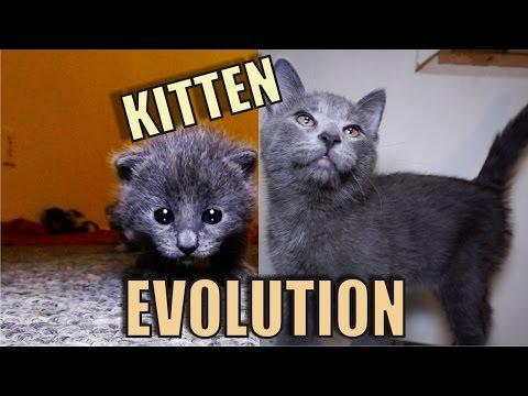 Kitten Evolution - The Gibbyson