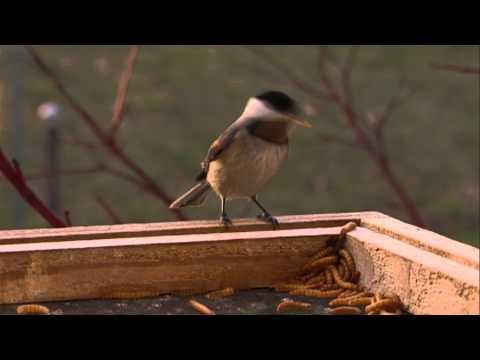 Winter Birds - Discover Nature (KRCG)