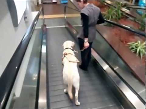 Betty the Guide Dog and Caitlin Blay