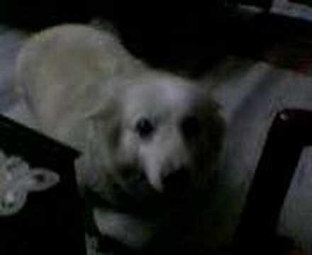 MY CUTE DOG JERSEY