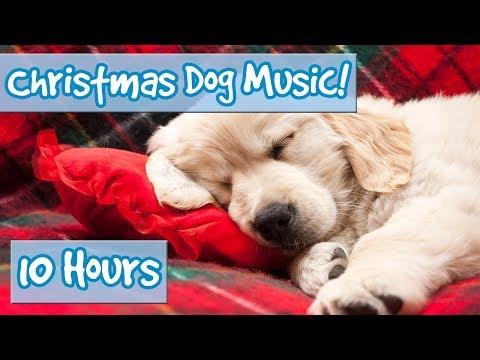 Merry Christmas Therapy Music for Dogs! Calming Christmas Music for Dogs in the Holiday Season! 🎅🏻