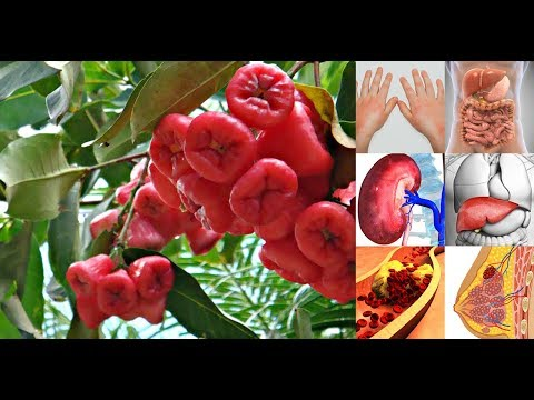 Health Benefits of Rose Apple ( Makopa )  | All About your Health