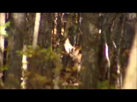 Bowhunting - Deer Close Encounters