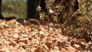 Deserts and Life-The Australian Outback prt 3