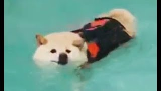 Swimmy boi