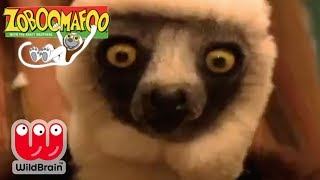 Zoboomafoo | Episode: Lemur snow day! | Animals For Kids