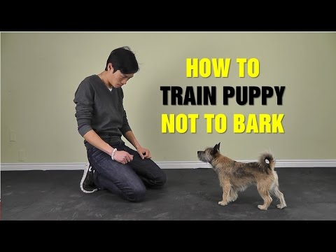 Online Dog Training: How To Train Puppy Not To Bark - Teach Dog to Stop Barking