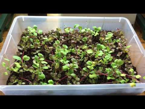 Indoor Mini Grow Bed Container Garden - Day 23, Big Changes
