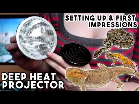 Is This The FUTURE of Reptile Heating? Really? - Deep Heat Projector!