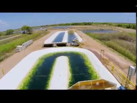 Innovative water bioremediation: algae for sustainable aquaculture