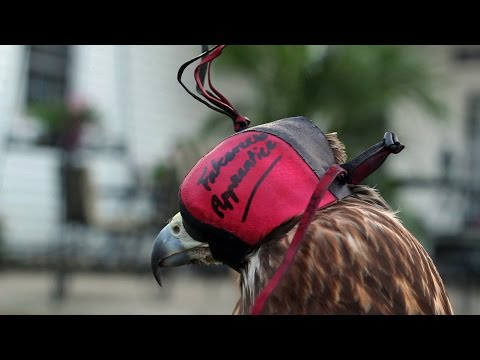 How to Make a Dutch Hood for Falconry
