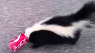 Guy Saves Skunk With Coke Can On His Head | What's Trending Now