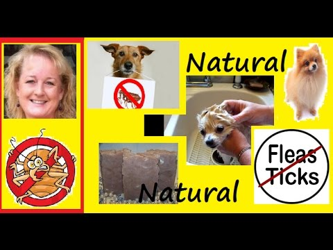 How To Kill Fleas On Your Dog Naturally