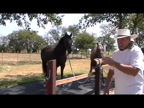 How to Worm a Horse - Things To Consider & Problems - Worming A Horse - Horsemanship Tips -