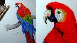 10 03 How To Draw A Parrot And Colour It Video Playkindle Org