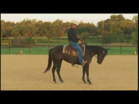 Reaffirming the Word Whoa Means Backup to the Reining Horse