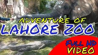 Lahore Zoo in 2017 full HD