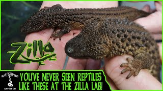 YOU'VE NEVER SEEN REPTILES LIKE THESE AT THE ZILLA LAB!