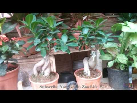 Beautiful Plant Nursery in India | Bonsai Plants
