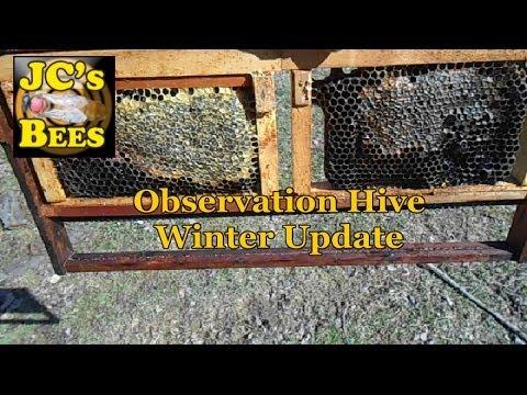 Observation Hive After Polar Vortex