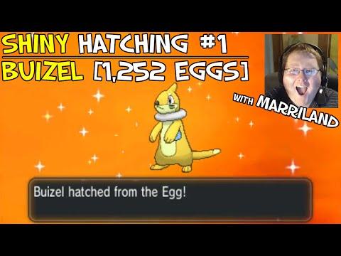 Shiny Pokémon Hatching #1 — Buizel [1,252 Eggs, geez...] [Masuda Method] [Live Reaction]