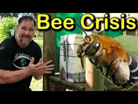 Why We Got Rid Of Our Bees? Honey Bee Crisis!