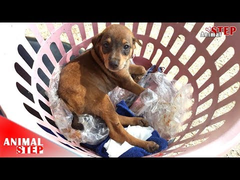 Pitiful Puppy Dragged from the Wood to Find Help during Heavy Raining – Now He's Safe