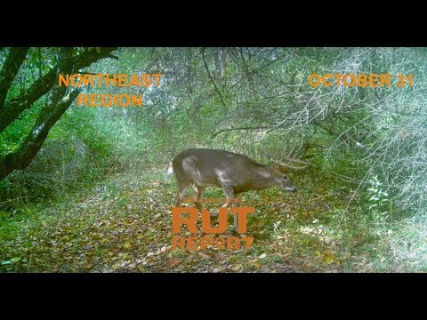 Northeast Rut Report: Daylight Activity Is Heating Up