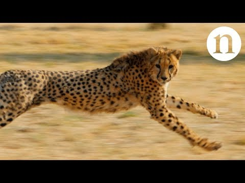 Anatomy of a hunt: Speed, strategy and survival