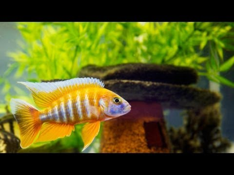 How to Clean Fish Tank Accessories | Aquarium Care