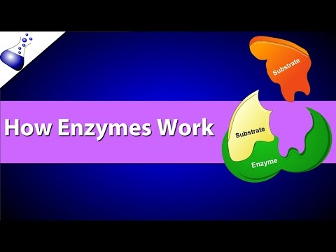 How Enzymes Work