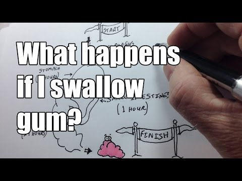 What happens if I swallow chewing gum?