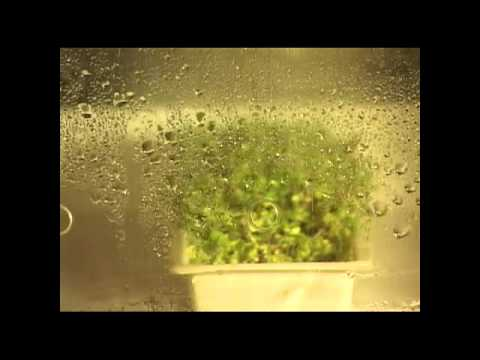 Broccoli Seeds to Broccoli Sprouts Time Lapse Easygreen Sprouter
