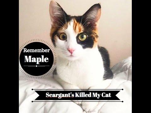 Remember Maple- Seargant's Flea Killed My Cat