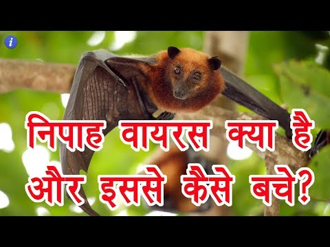 Nipah Virus Explained in Hindi | By Ishan