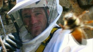 African Killer Bee Hive | Deadly 60 | Series 2 | BBC