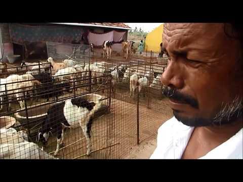 A Simple Goat Farm Part-III