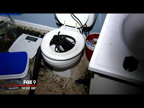 Sewage shoots out of toilet