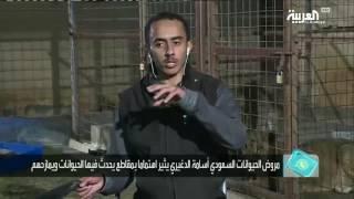 تفاعلكم: سعودي يشارك منزله مع حيوانات مفترسة