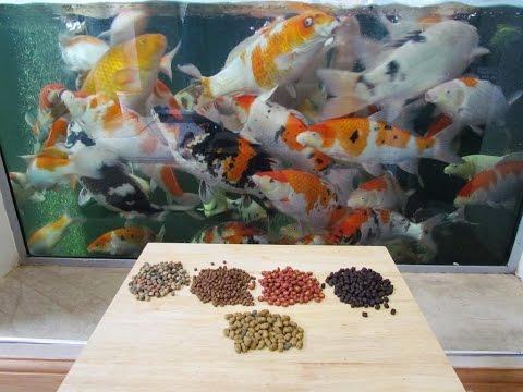 Koi Food Pellets - What Pellets I Feed My Koi