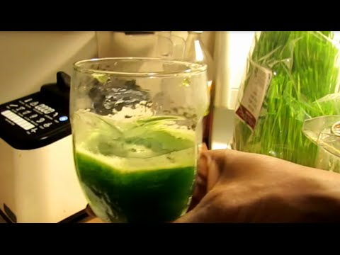 Make a Wheatgrass shot without a juicer!