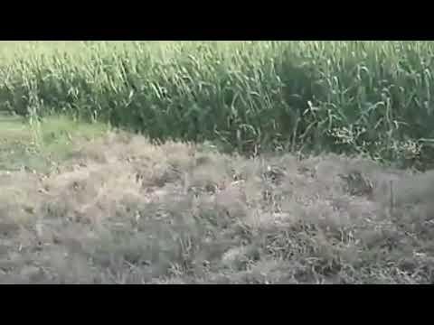 The Bitch Died next day after Killing the Giant Snake / Big Snake in my backyard / Snake vs Dog