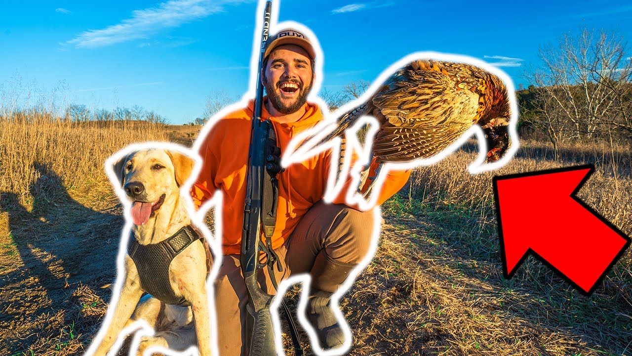 PHEASANT Hunting in My BACKYARD for the FIRST TIME!!! (LIMITED OUT) Catch Clean Cook