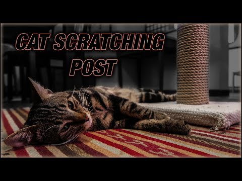 DIY Cat Scratching Post. Super Cheap And Easy!!