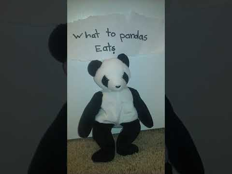 What do pandas eat, besides bamboo?
