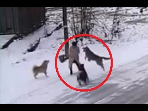 Dogs Attack a Woman!!!