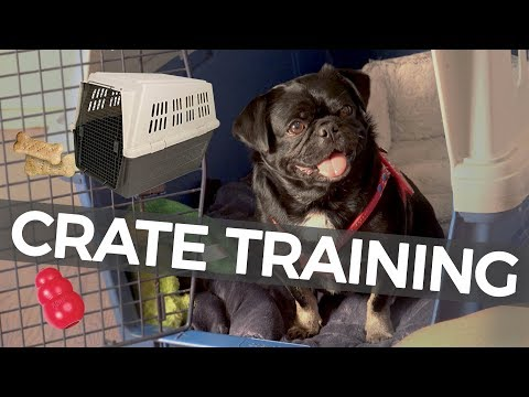 How to Crate Train Your Puppy