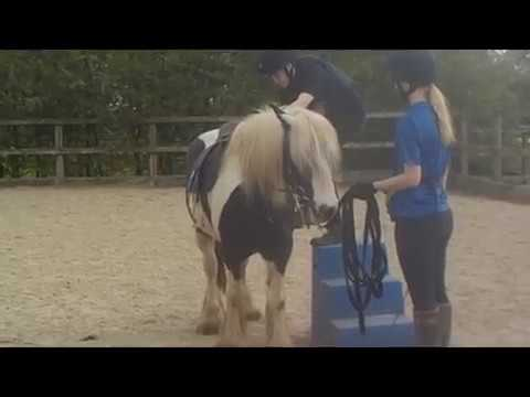 Blue Cross Dilsey is looking for a home as a ridden project pony