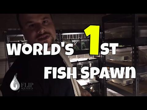 Fish Room Tour: A World First in Aquarium Fish