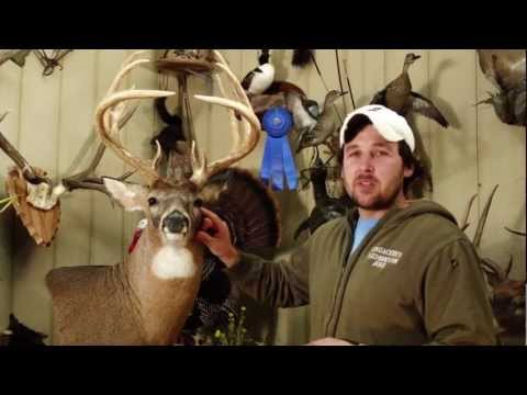 What to Look for in a Whitetail Deer Mount by Lengacher's Taxidermy